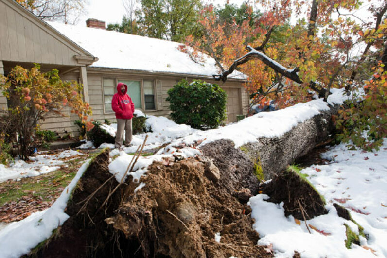 Emmanuel S. Tsitsilianos looks at the tree that was uprooted by the nor'easter on Oct. 31, 2011 in Worcester, Mass. The tree fell into his driveway, destroying two cars, and damaging his roof. Kayana Szymczak/Getty Images