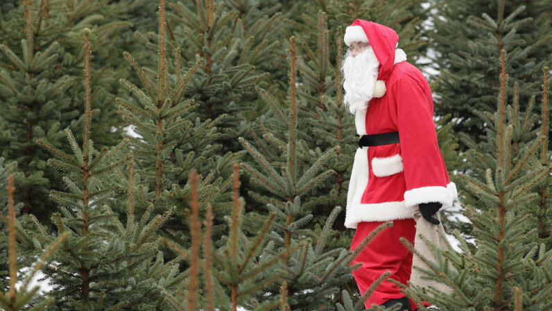 Santa among Christmas trees