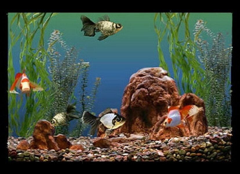 水族館の魚の選び方