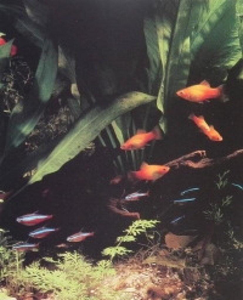 水族館の魚の世話をする方法