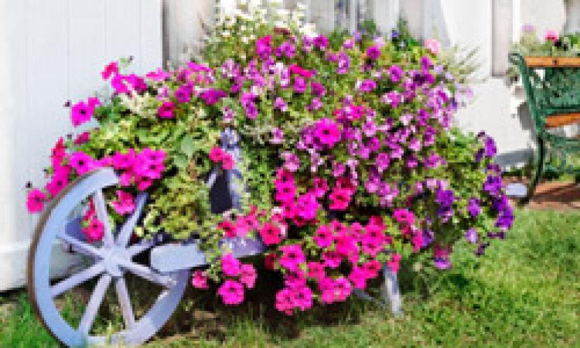 ヴィニングペチュニア:一年生の花の肖像