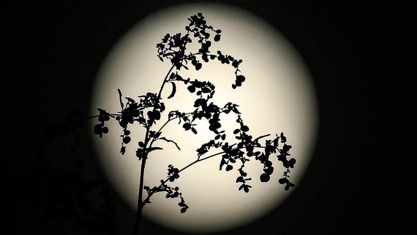 full moon behind a tree, Turkey