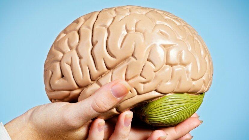 5 Dinge, die Sie nicht über die Spende Ihres Gehirns an die Wissenschaft wussten
