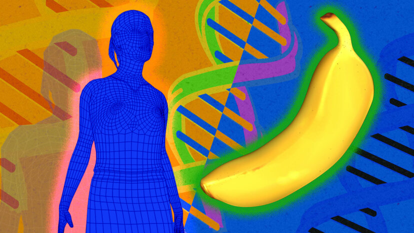 人々とバナナは本当に同じDNAの50パーセントを共有していますか?