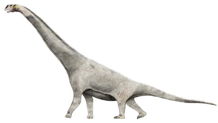 本物のブラキオサウルスは立ち上がってくれませんか?