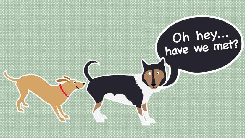 なぜ犬はお互いのお尻を嗅ぐのですか?