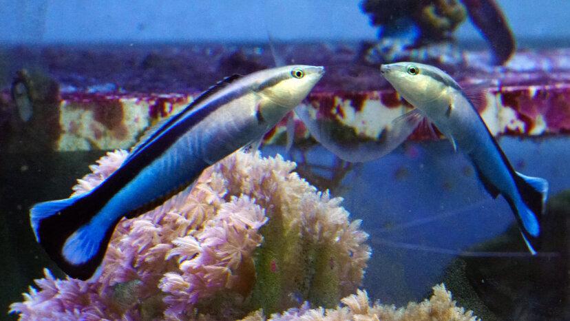 1匹の魚、2匹の魚、赤い魚、スマートな青い魚