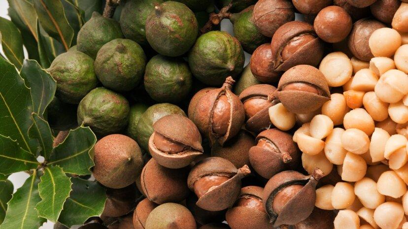 マカダミアナッツがとても美味しくてクレイジーな高価な理由はここにあります