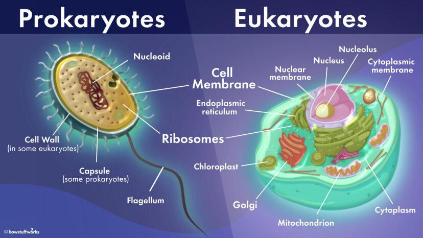 原核細胞と真核細胞の違いは何ですか?