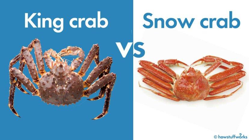 Was ist der Unterschied zwischen Schneekrabben und Königskrabben?