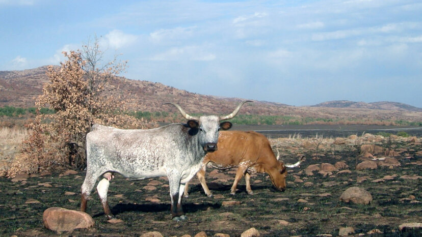Oklahoma's Wichita Mountains Wildlife Refuge