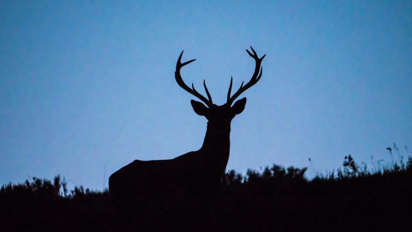 """Können Menschen """"Zombie Deer Disease"""" fangen?"""