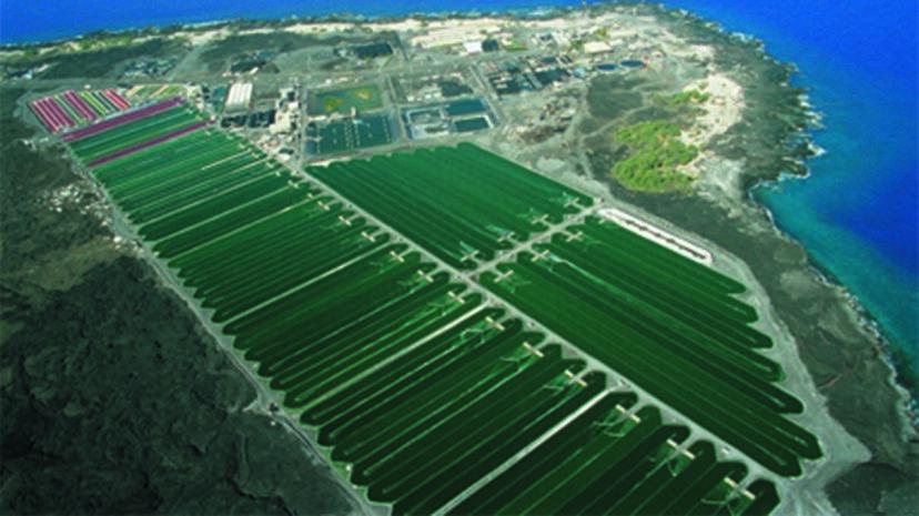藻類:池のスカムまたは未来の食物?