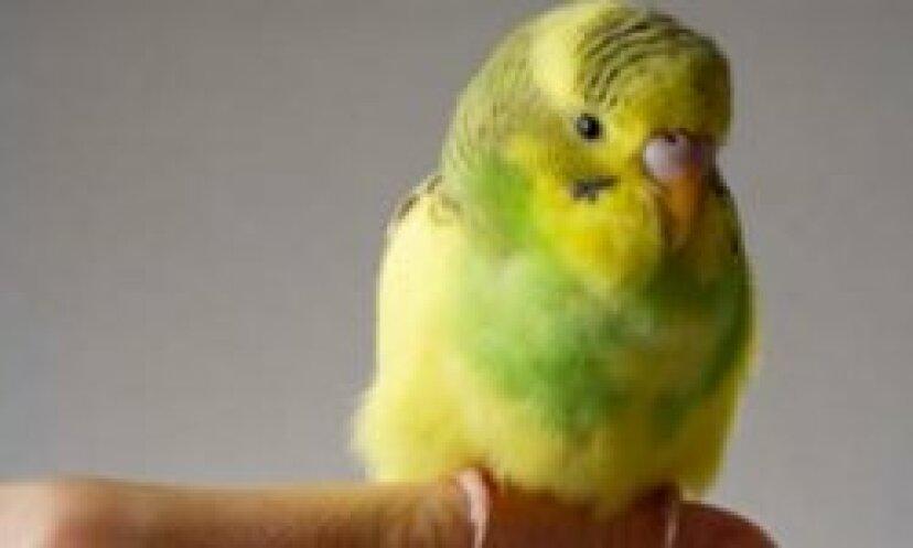 羽毛アレルギーのいくつかの症状は何ですか?