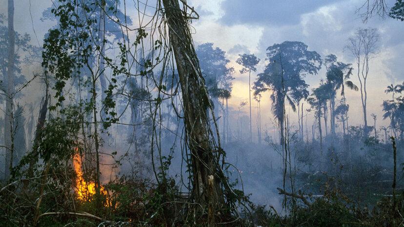 アマゾンの熱帯雨林が完全に破壊された場合はどうなりますか?