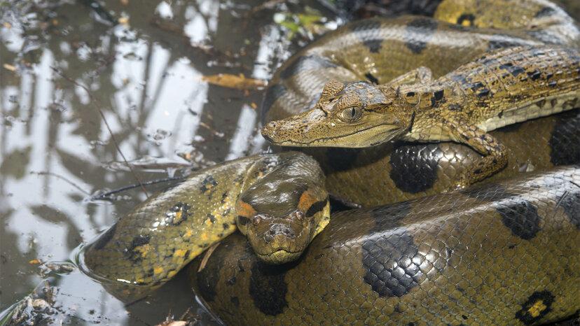 El mundo acuoso del monstruo Anaconda