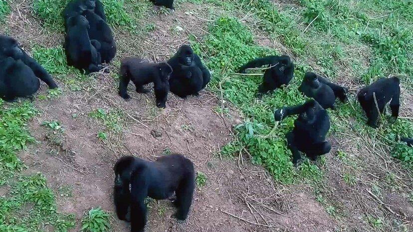 あなたが愛する5つの中毒性の動物カム