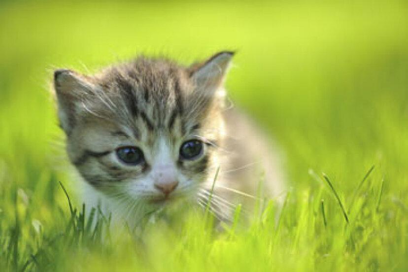 あなたの香りが動物に優しいことをどのように確信できますか?