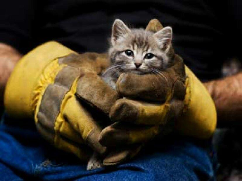 動物救助組織