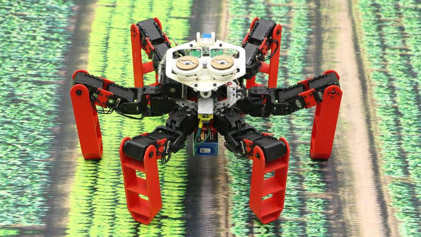 'AntBot' usa navegación celestial en lugar de GPS