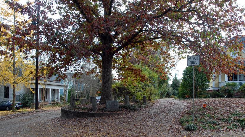 Un 'árbol que se posee a sí mismo' crece en Athens, Georgia