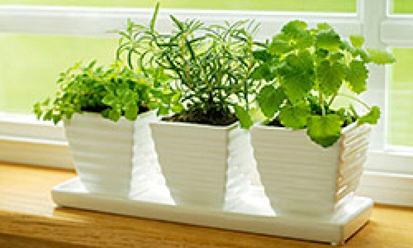 裏庭のない庭:スペースなしで成長する方法