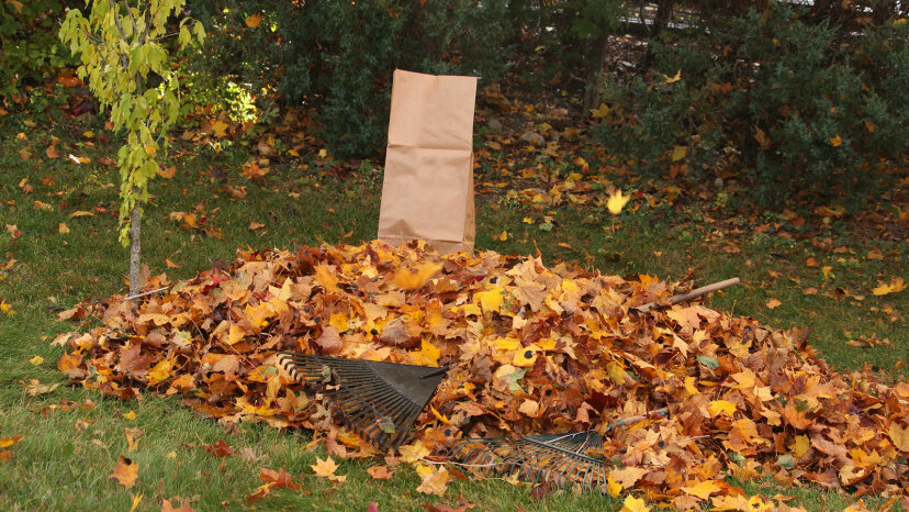 紅葉を袋に入れる方法