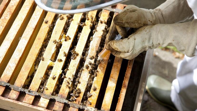 diseases, beekeeping