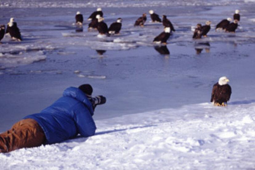 鳥の写真撮影のしくみ