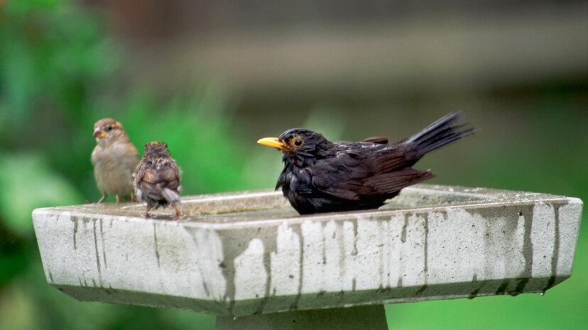 異なる鳥種は互いに「話す」ことができますか?