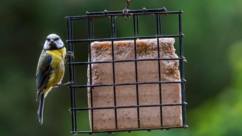 Warum wird Suet in Birdfeed verwendet?