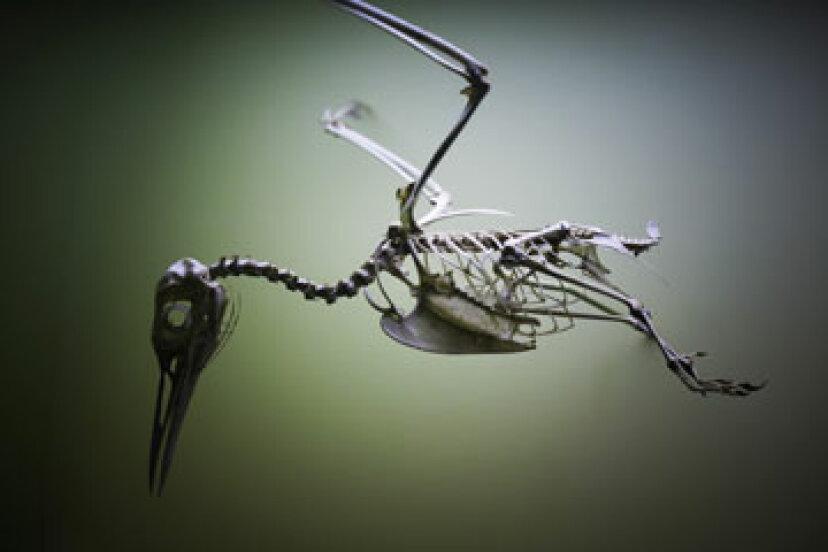鳥と恐竜の間に明確なつながりはありますか?