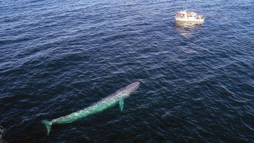 Warum sind Wale so groß?