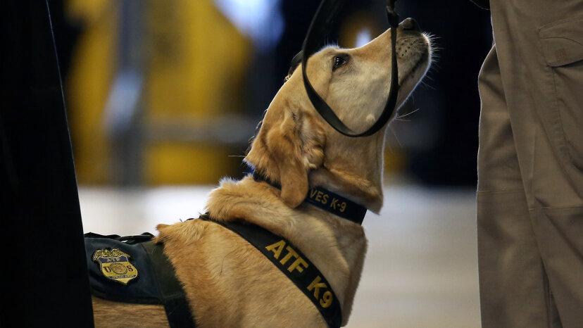 爆弾探知犬のしくみ