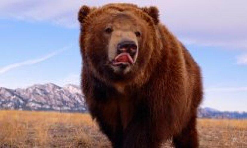 ヒグマの写真:写真:クマ!
