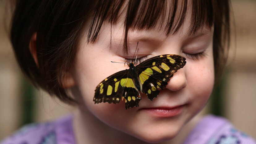 malachite butterfly, girl