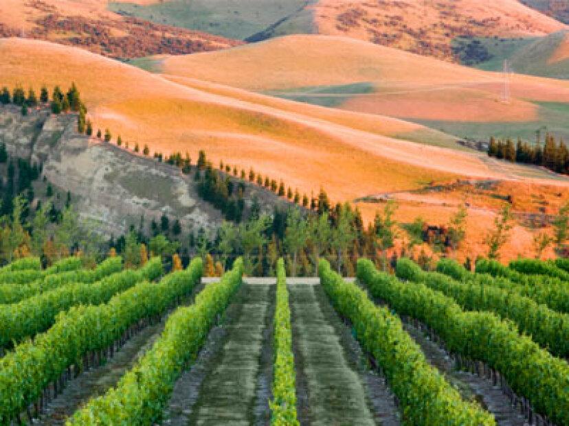 カンタベリーワイン産地への究極のガイド