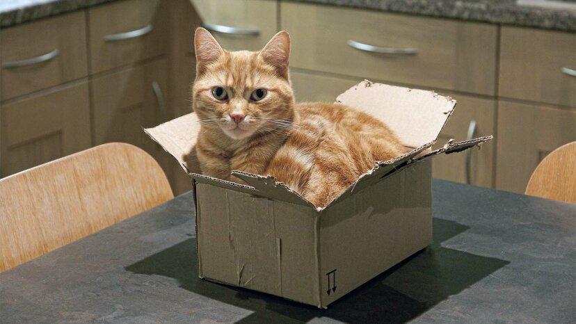 'If I Fits I Sits': Khoa học đằng sau những con mèo ngồi trong hình vuông