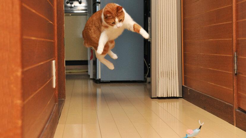 cat catnip