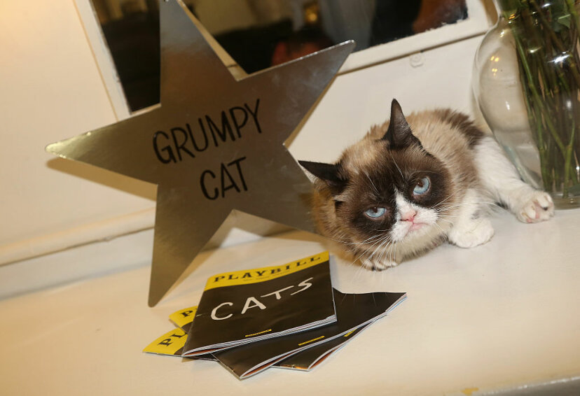 Grumpy Cat relaxes in her dressing room before making her Broadway debut in (what else?) 'Cats' on Broadway, 2016. Bruce Glikas/FilmMagic/Getty Images