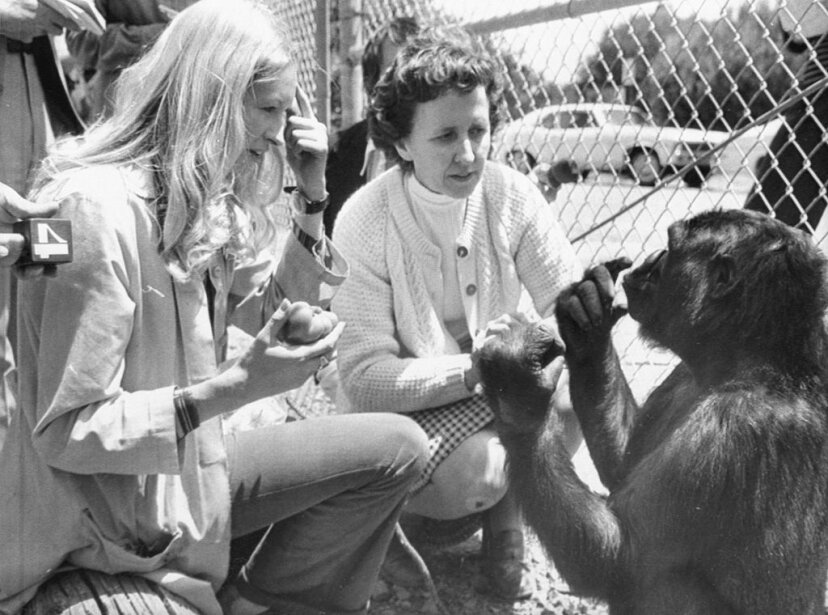 Koko is pictured at age 4 along with instructor  Francine 'Penny' Patterson (left) and June Monroe, an interpreter for the deaf. Bettman/Getty Images