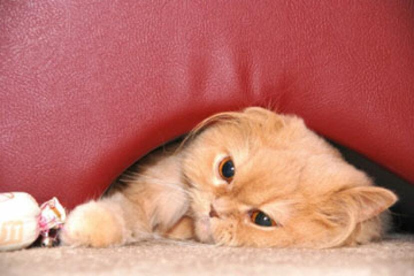 毛玉を持つ猫のための家庭薬