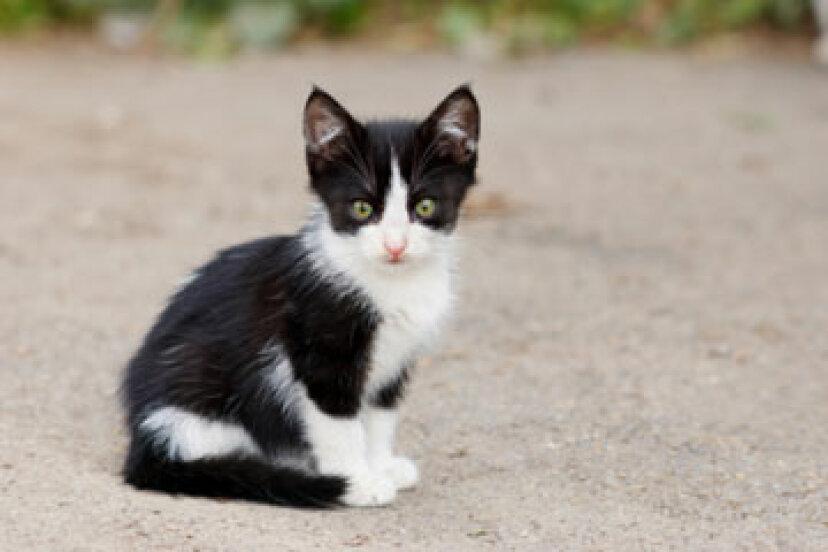 ワームを持つ猫のための家庭薬