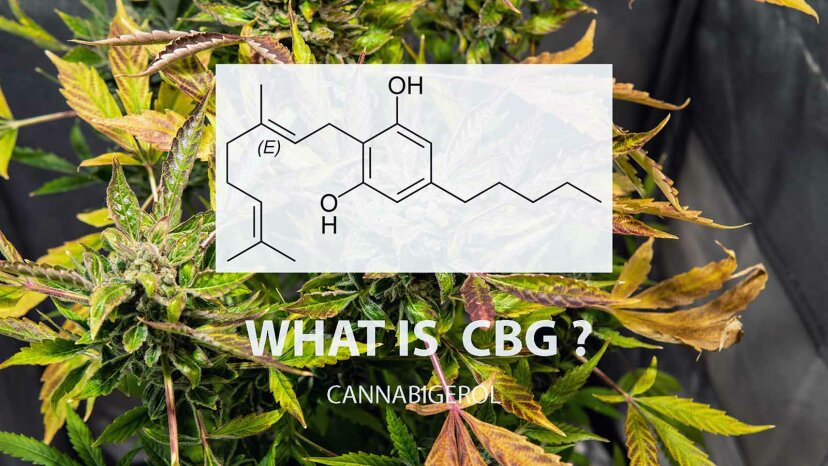 CBG chemical compound