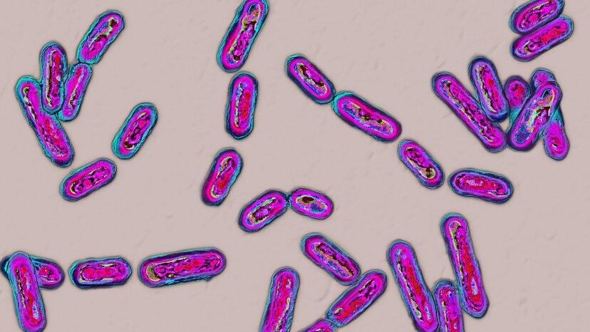 Fäkaltransplantation: Dafür gibt es eine Pille