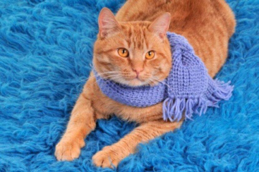 無料のスカーフ編みパターン