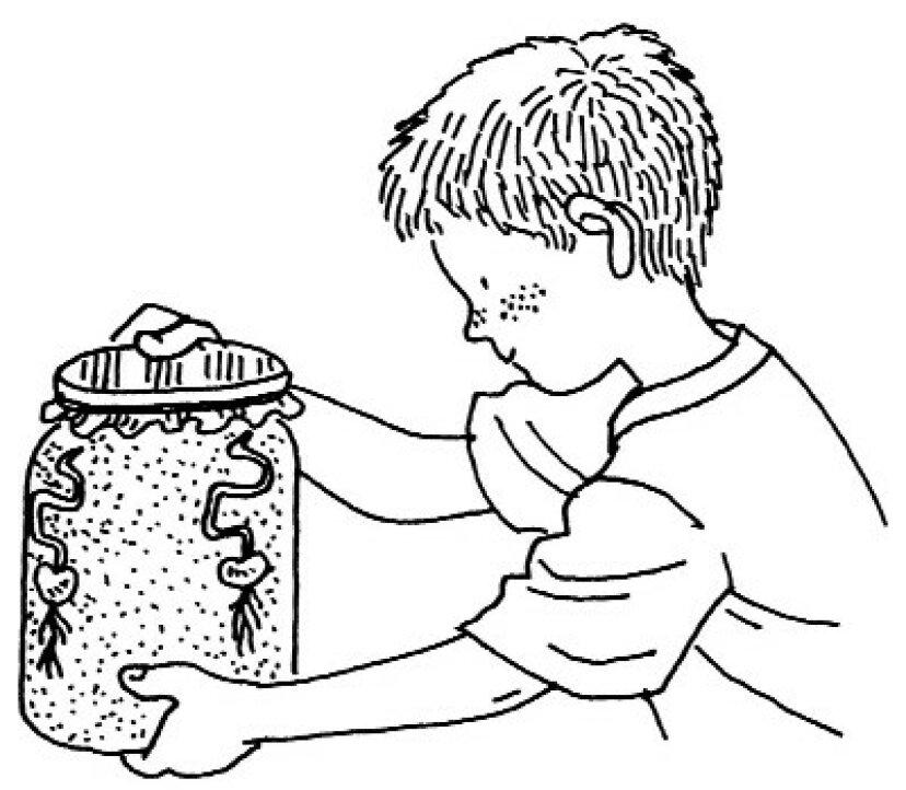 子供のための科学プロジェクト:植物の分類