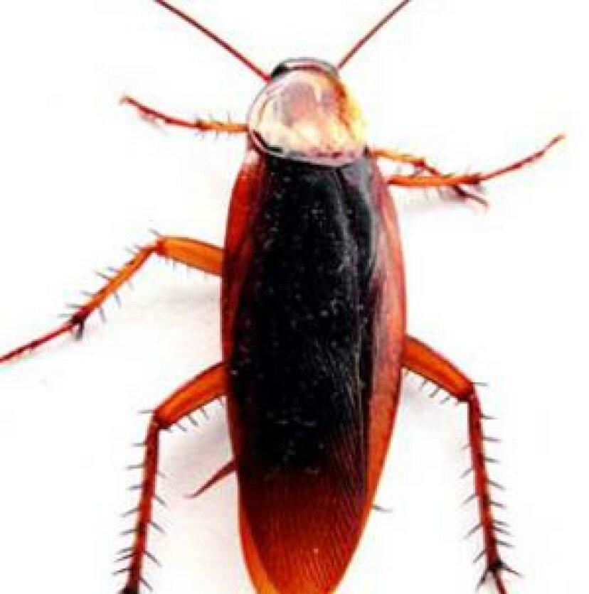 ゴキブリとアレルギー