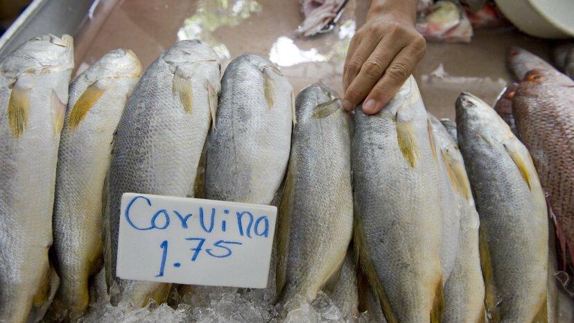 魚のセックスがこんなに騒々しいことを誰が知っていましたか?