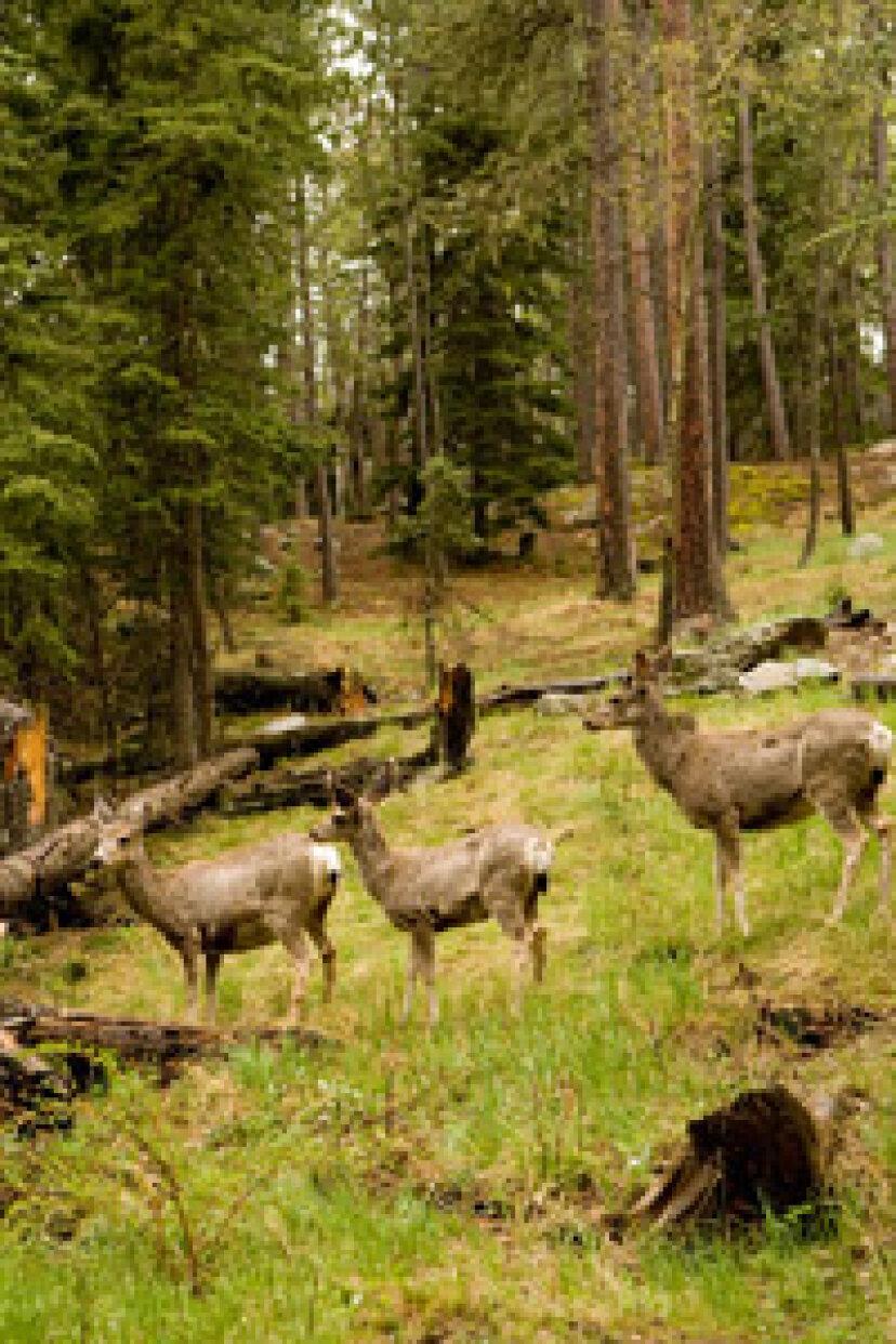 鹿の個体数はどのように数えられますか?